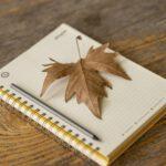 Wir wünschen erholsame Herbstferien